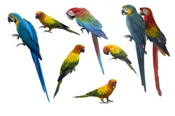 Set of beautiful macaw birds and sun conure isolated on white background