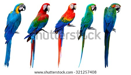 Stock Photo Set of beautiful macaw birds isolated on white background, blue and gold, green-winged, scarlet, buffon's and harlequin