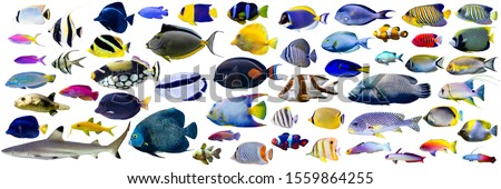 Set of Beautiful Marine fish and shark on white isolated background such as angelfish, butterflyfish, surgeon, wrasse and snapper stock photo