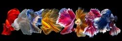 Set of betta fish on black background