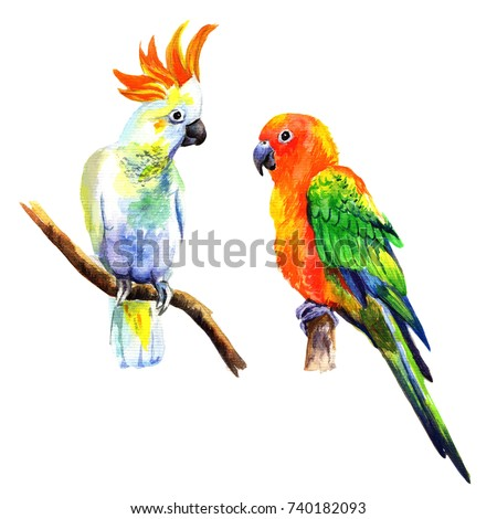 Set of birds parrots. Watercolor illustration in white background.