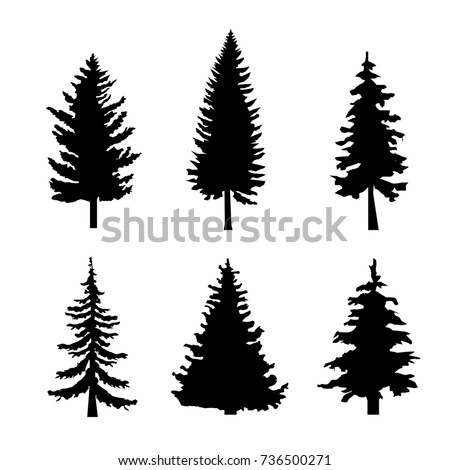 Set of Black Silhouettes of Pine Trees on White Background  illustration