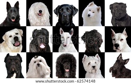 Set of 15 black & white dog breeds in studio