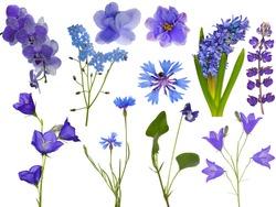 set of blue flowers isolated on white background