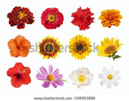 set of bright colored spring and summer flowers isolated on white background. #548983888