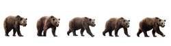 Set of brown bears isolated on white background. Collage of a dangerous predator bear. Banner. Copy space.