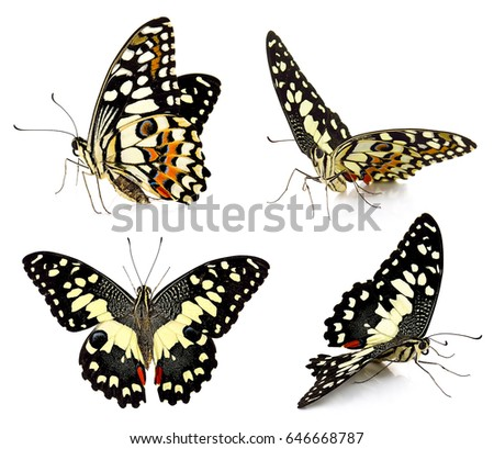 Set of butterfly isolated on white background. #646668787