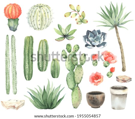 Set of cacti, succulents, flowers, stone and flowers pots, watercolor isolated collection on white background, set 1.