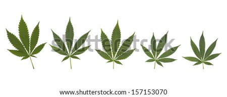 Set of cannabis leaves isolated on white
