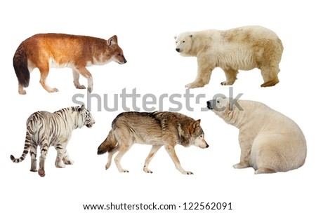Set of Carnivora mammal. Isolated over white background