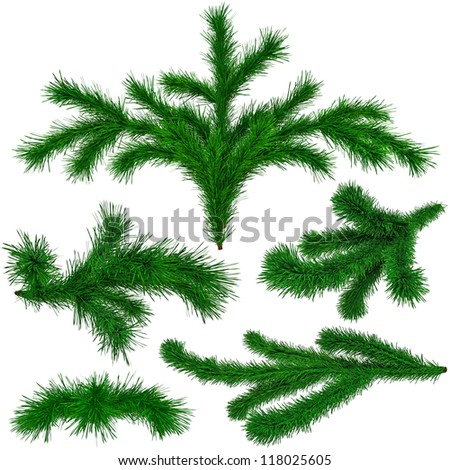set of Christmas green fir-tree branches on white background