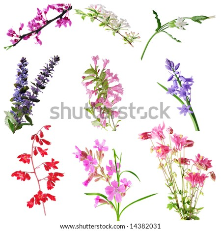 Set of cluster, sage flowers isolated on white - stock photo