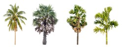Set of Coconut tree and Palm tree collection isolated on white background.