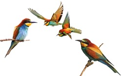 set of colored birds in different poses,birds of paradise, bee-eaters, iridescent colors