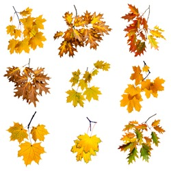Set of colorful autumn branch isolated on white background.