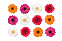 Set of colorful gerbera flowers isolated on white.