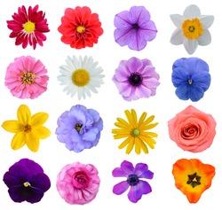 Set of colorful seasonal blooms