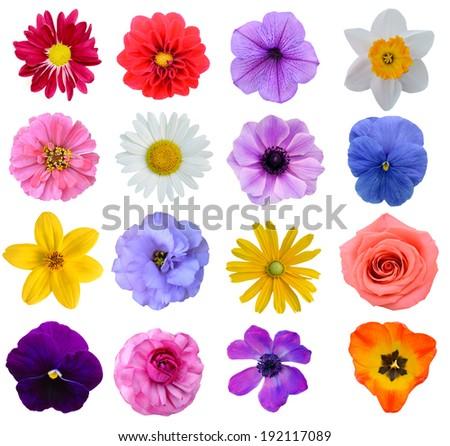 Set of colorful seasonal blooms #192117089