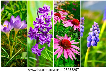 set of cone flower, crocus, Hyacinth and Bluebells flower