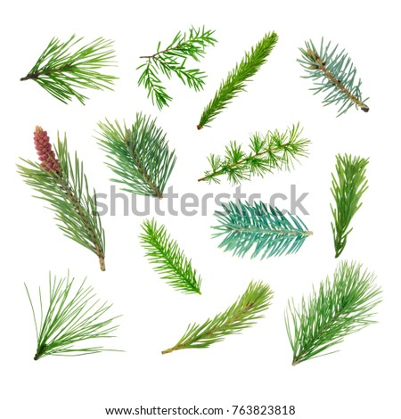 set of coniferous branches isolated