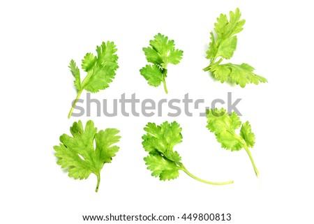 Set of coriander leaves on white background. #449800813