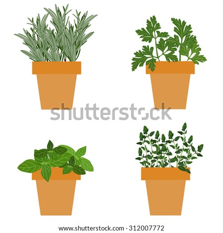 Set of culinary herbs in pots with fresh thyme basil, rosemary and parsley. Grow The Garden