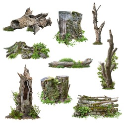 Set of cutout tree stump. Trunk and mossy tree roots. Old tree stub surrounded by green foliage. Dead tree isolated on white background. High quality clipping mask.