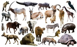 Set of different African animals isolated over white
