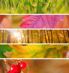 Set of Different Autumn Banners - colorful vibrant backgrounds for Internet, beautiful Autumn season
