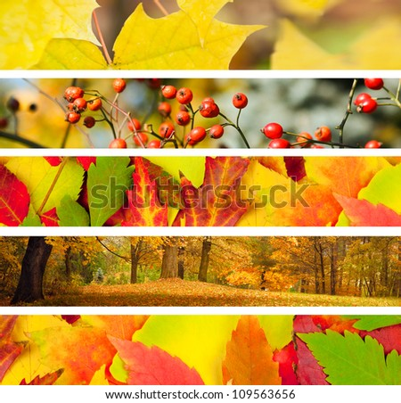 Set of 5 Different Autumn's Banners / Nature
