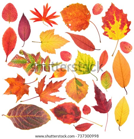 Set of different bright autumn leaves isolated on white background #737300998