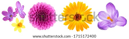 Set of different flowers buds isolated on a white background. Lilac flowers. Narcissus flower. Dahlia flower. Marigold flower. Crocus flower.