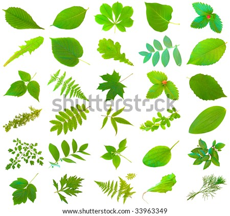 set of different green leaves over the white background #33963349
