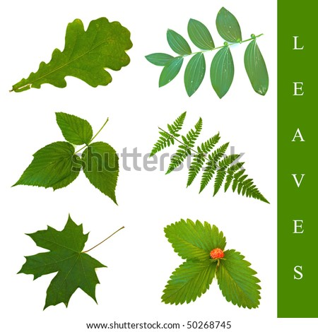 set of different leaf images over white background - stock photo