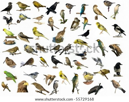 Set of 54 different photographs of birds isolated on white background