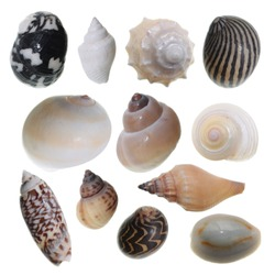 Set of different sea shells isolated on white