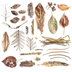 Set of dried plants collected on the North of Bali. Isolated over white background