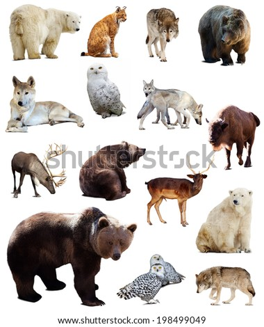 Set of european animals. Isolated over white background with shade