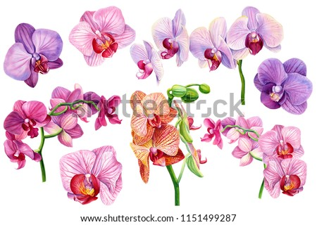 set of exotic orchid flowers on isolated white, botanical painting, watercolor illustration, tropical flora