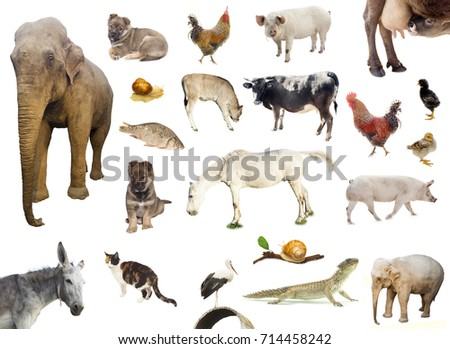 set of farm and wild animals isolated on white  #714458242