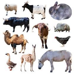 Set of farm animals. Isolated on white background