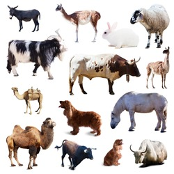 Set of farm animals. Isolated on white background with shade