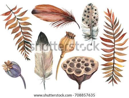 set of feathers, poppy, lotus, autumn leaves watercolor illustration, hand drawing