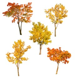 set of five autumn trees isolated on white background