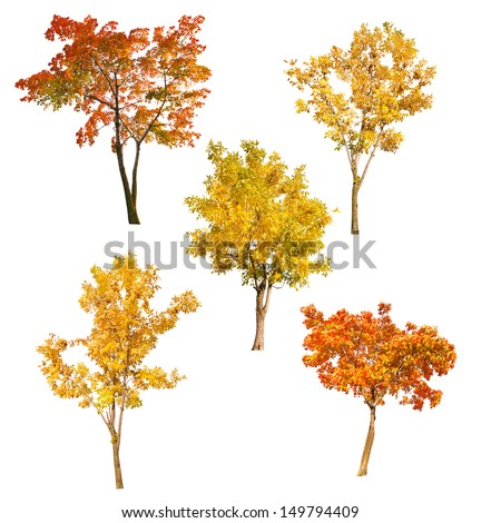 set of five autumn trees isolated on white background #149794409