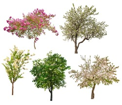 set of five blooming trees isolated on white background