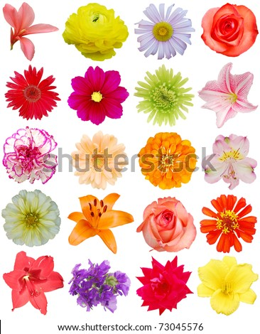 Set of flowering heads