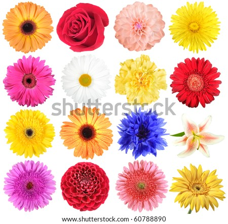 Set of flowers. Isolated on white background. Close-up. Studio photography.