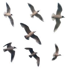 set of flying birds isolated on white background