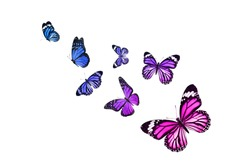 set of flying butterflies isolated on white